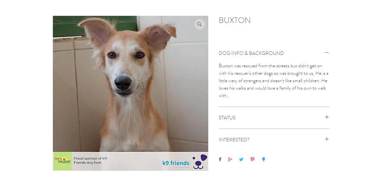 أفضل كلاب بيرد للتبني في دبي 2020