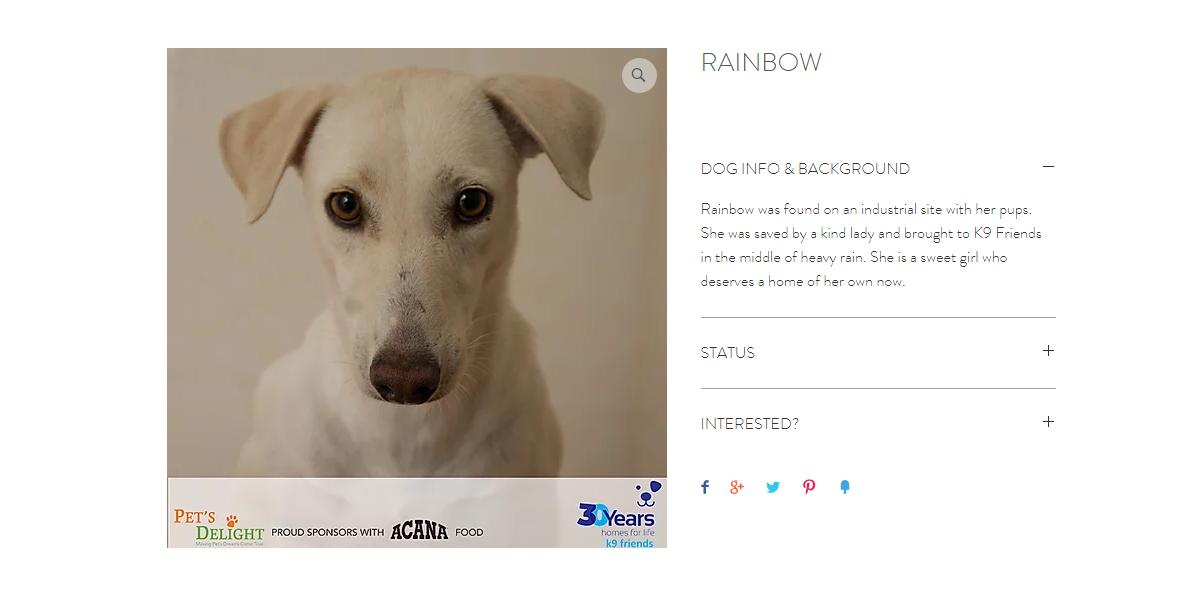 كلاب للتبني في دبي 2020