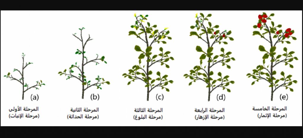 مراحل نمو النبات