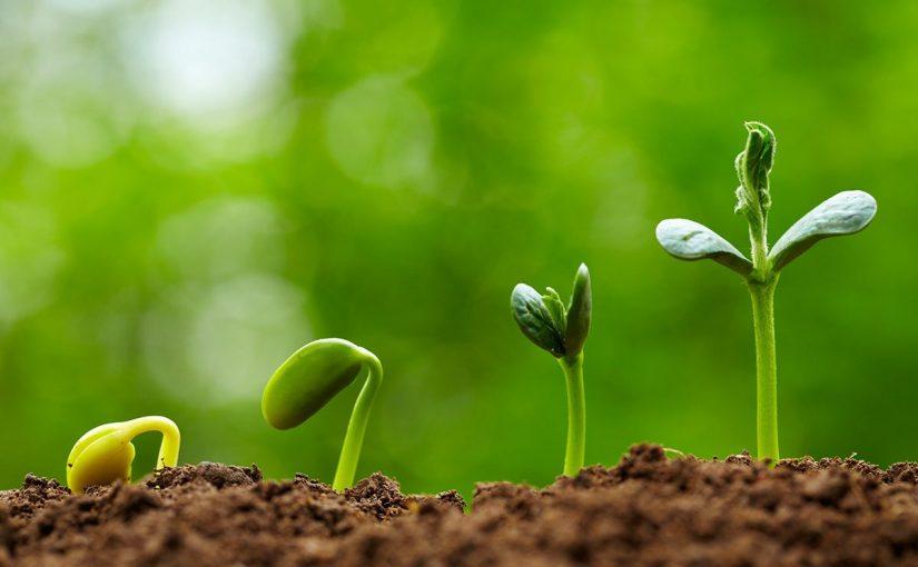 زراعة البقوليات