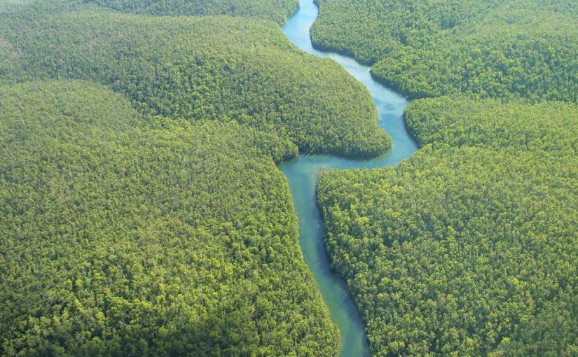معلومات عن غابات الامازون بالعربي