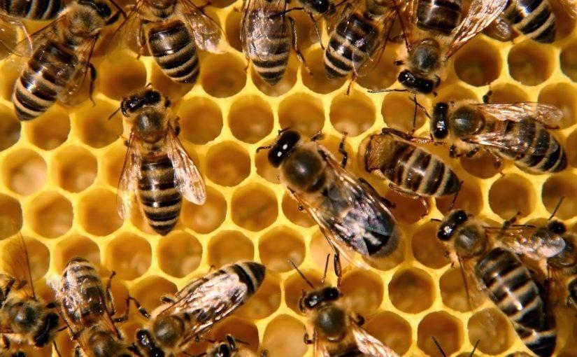 تفسير لسع النحل في المنام