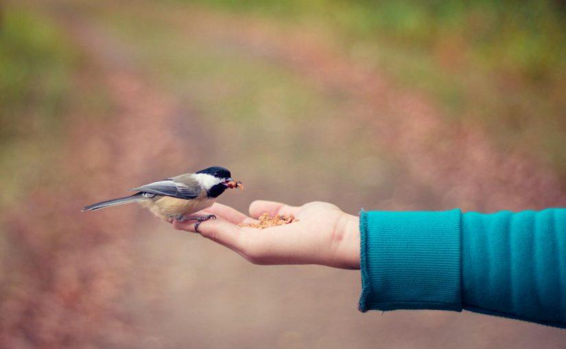 تفسير اطعام الطيور في المنام لابن سيرين موسوعة