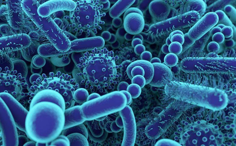 بحث حول البكتيريا والفيروسات