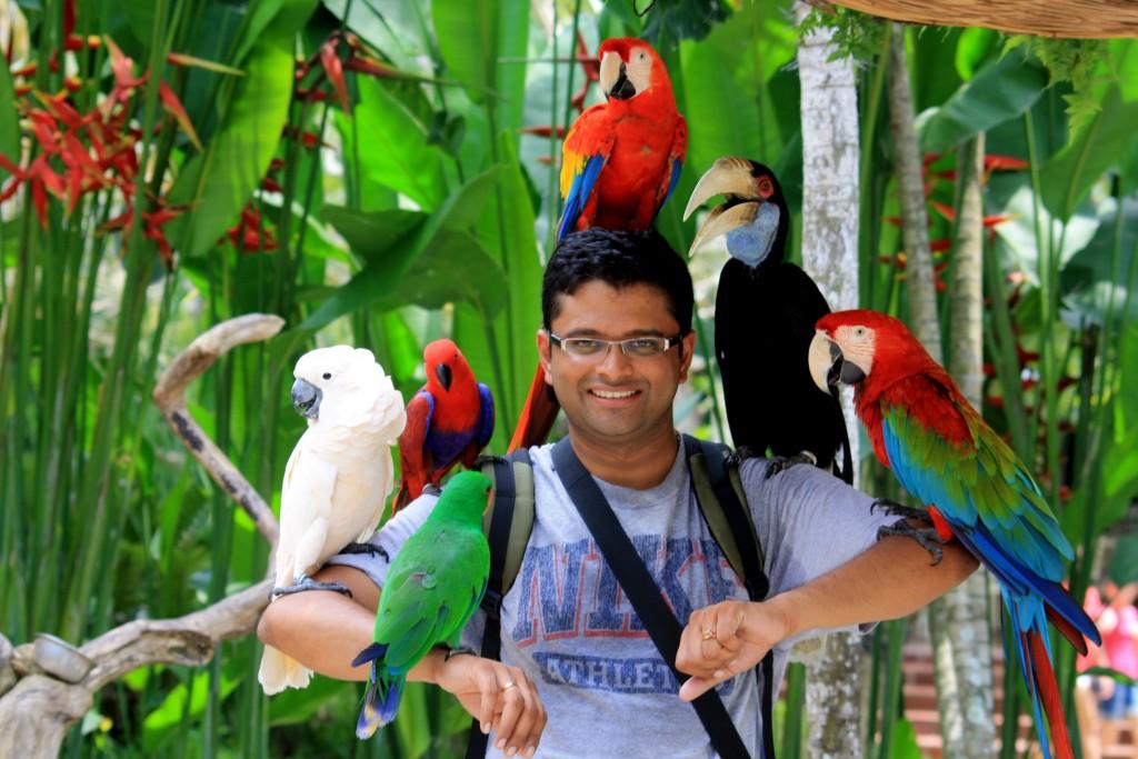 حديقة الطيور بالي Bali Bird Park