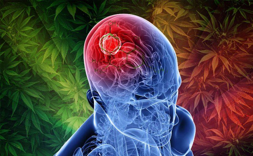 علاج تلف خلايا الدماغ بالاعشاب