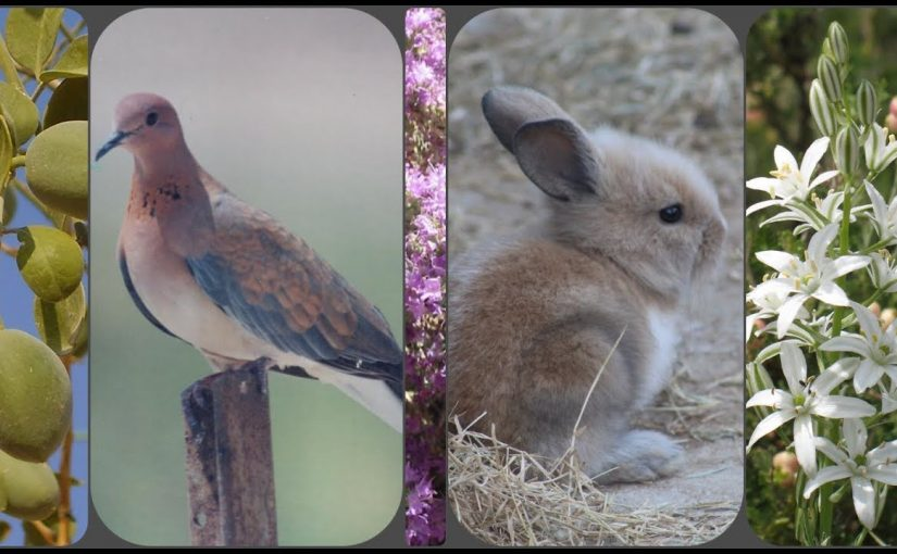 بحث عن التنوع الحيوي والمحافظة عليه