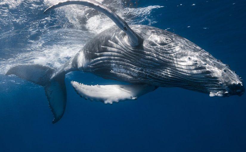 تفسير الحوت في المنام للعزباء التفسيرات الصحيحة الشاملة موسوعة