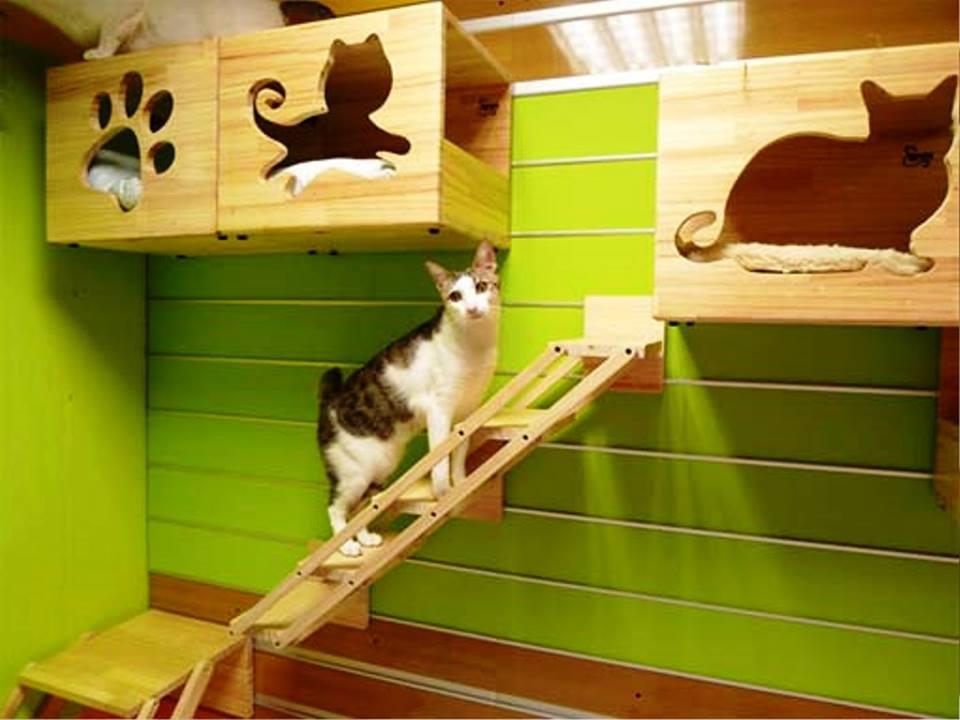 صور لبيوت الحيوانات