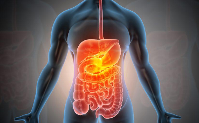 مكونات الجهاز الهضمي في الانسان