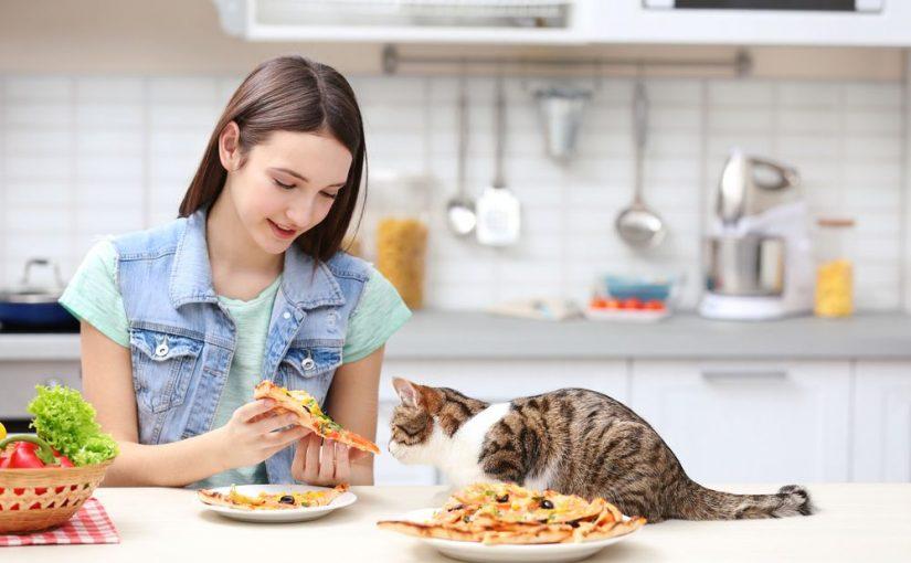 ماذا تأكل القطة من طعام البيت