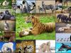 خصائص الثدييات وانواعها