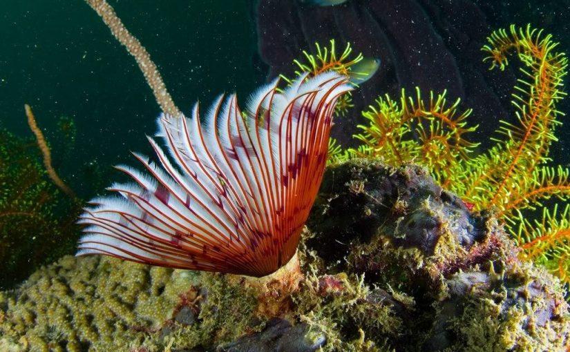 ما هي زنابق البحر