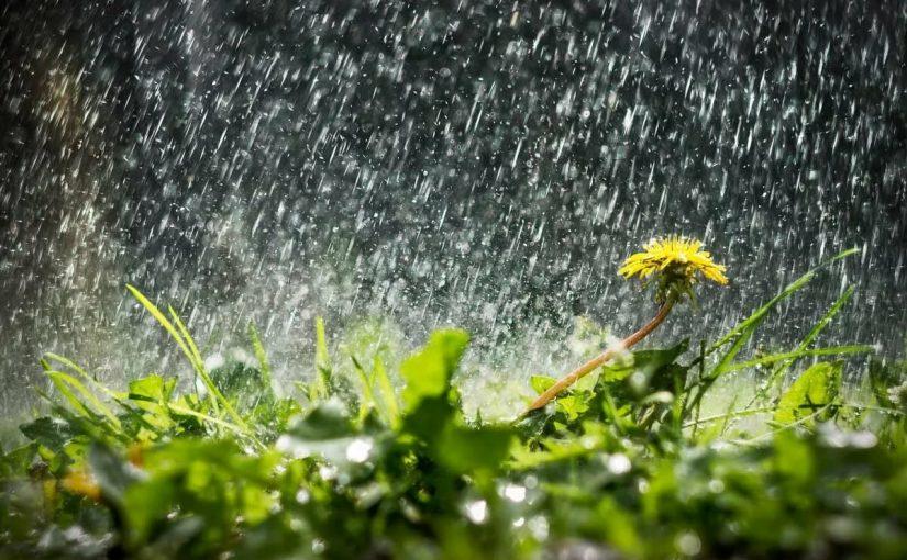خواطر عن المطر