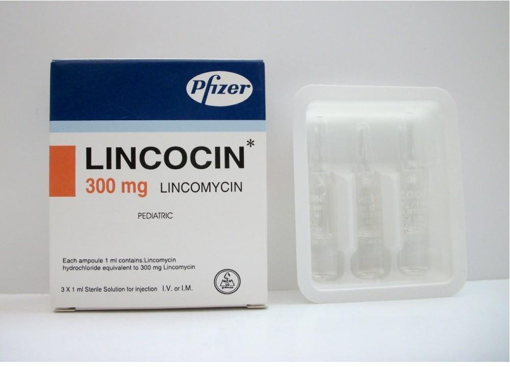 معلومات عن المضاد الحيوي لينكوسين Lincocin موسوعة