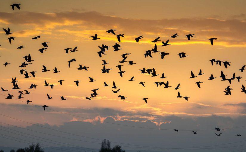 متى موعد هجرة الطيور