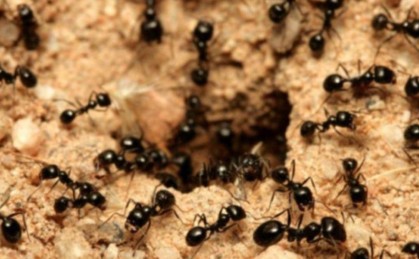اسباب ظهور النمل في المنزل وعلاجه