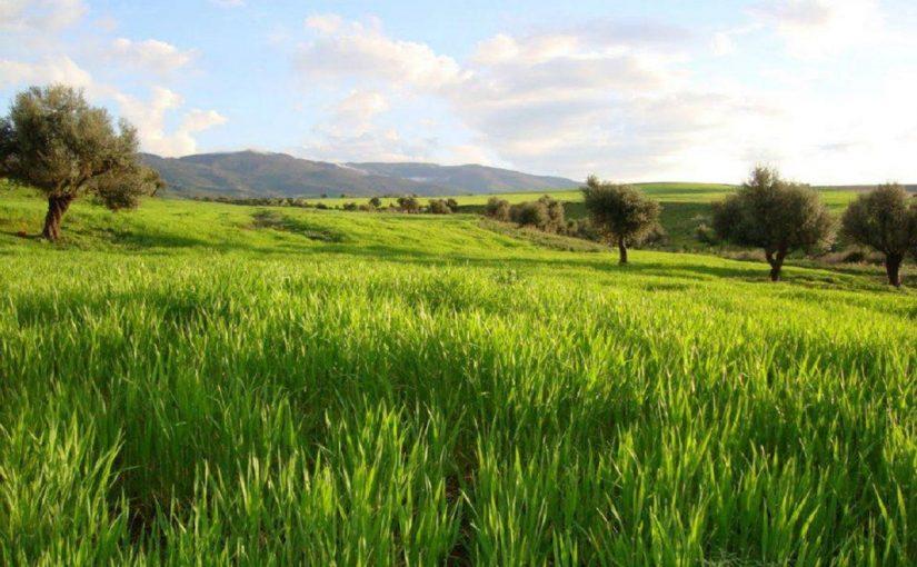 العشب الاخضر في المنام
