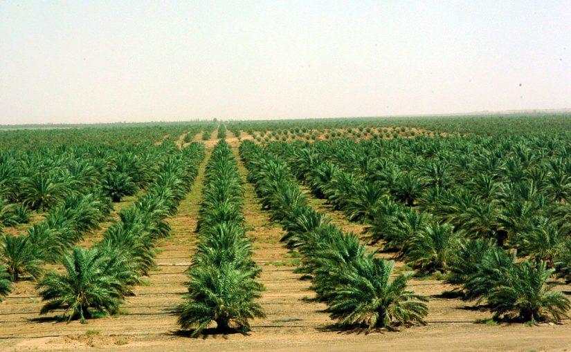الزراعة في السعودية