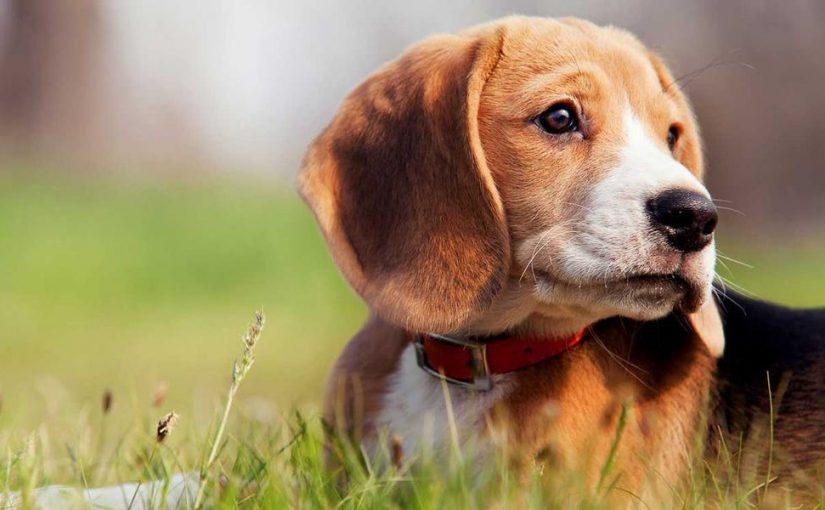 تفسير حلم هجوم الكلاب