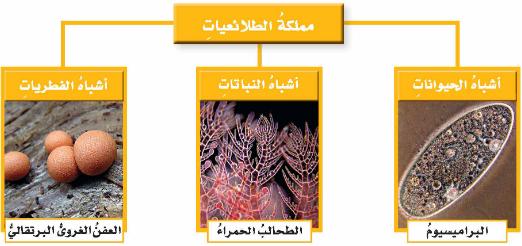المملكة التي تضم مخلوقات تشبه النباتات ومخلوقات تشبه الحيوانات في خواصها