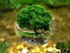 بحث عن مبادئ علم البيئة ونشأته ومجالاته مع المراجع
