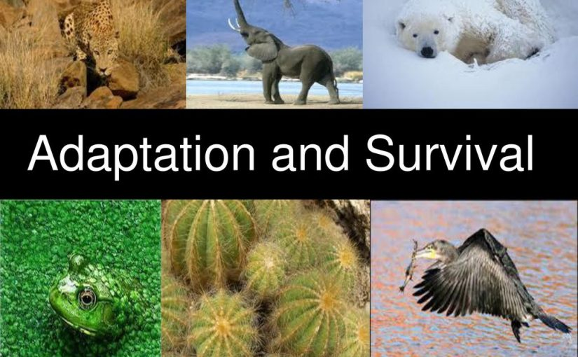 سلوك أو تركيب يساعد المخلوق الحي على البقاء
