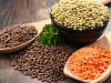 السعرات الحرارية في العدس النيء والمطهو وفوائدة الغذائية