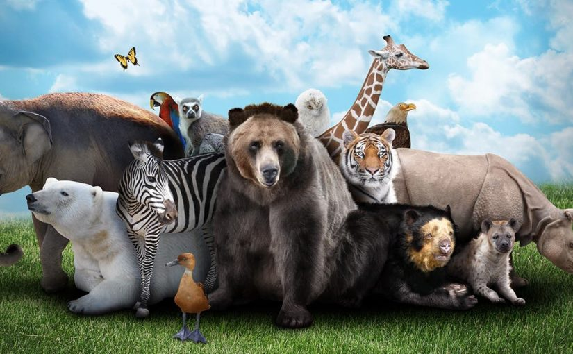 تفسير الحيوانات في المنام