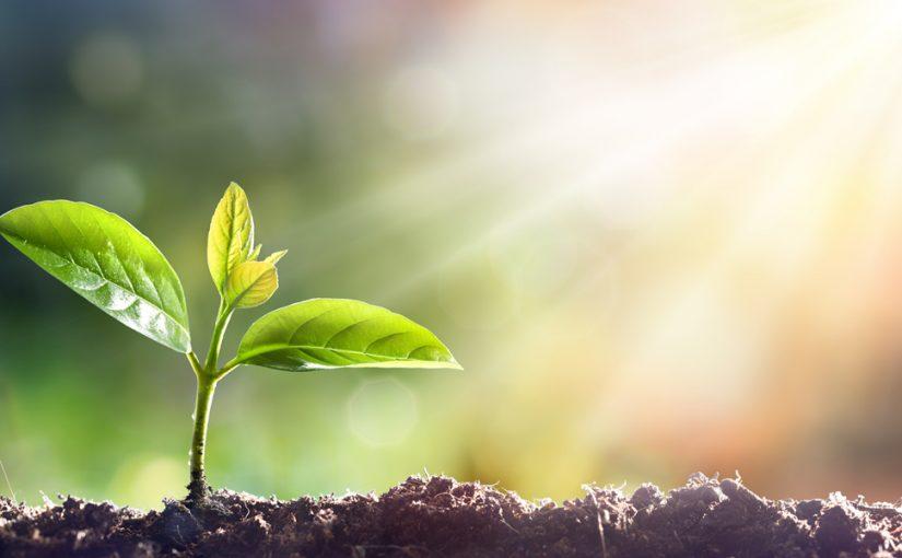 جزء النبات المسؤول عن امتصاص الماء والأملاح من التربة