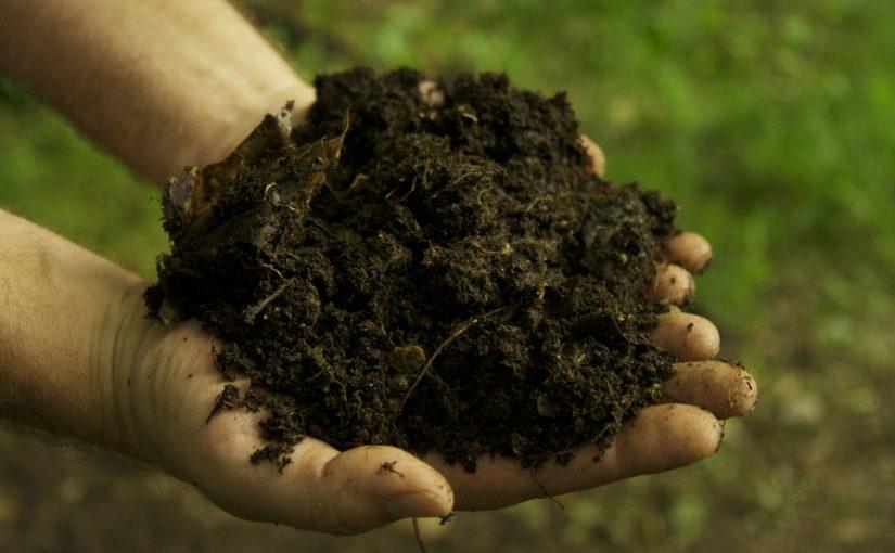 علاج ملوحة التربة