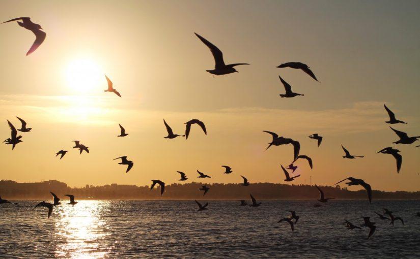 طائر اسمه يشبه نوتة موسيقية