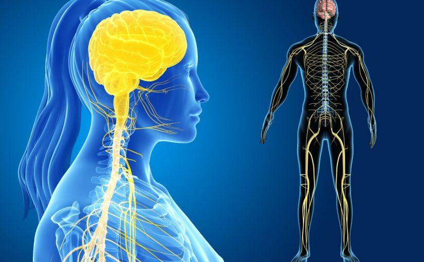 الوحدة الوظيفية في الجهاز العصبي