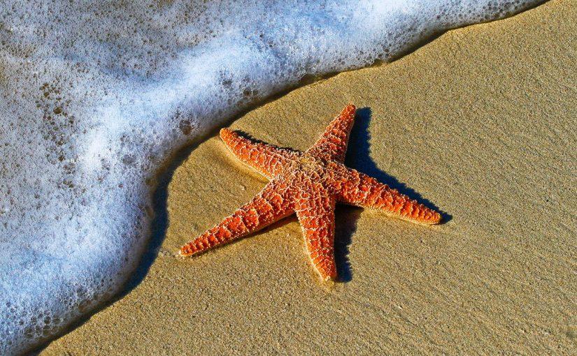 كيف يتكاثر نجم البحر