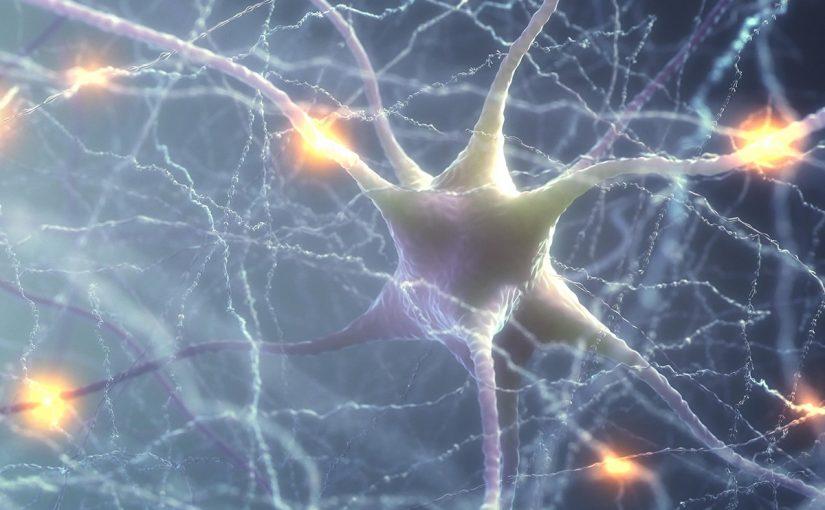 مما تتكون الخلية العصبية