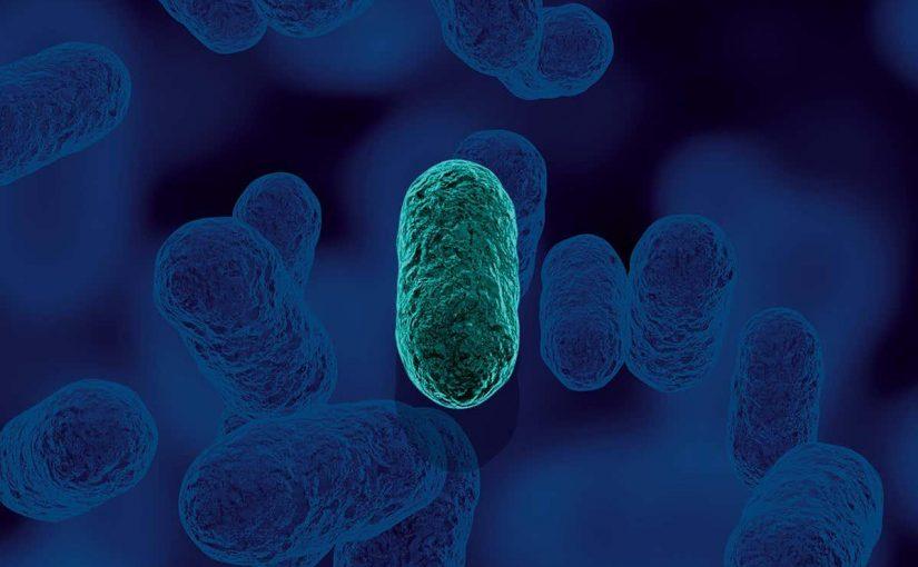 ما عدد الخلايا التي تكون البكتيريا