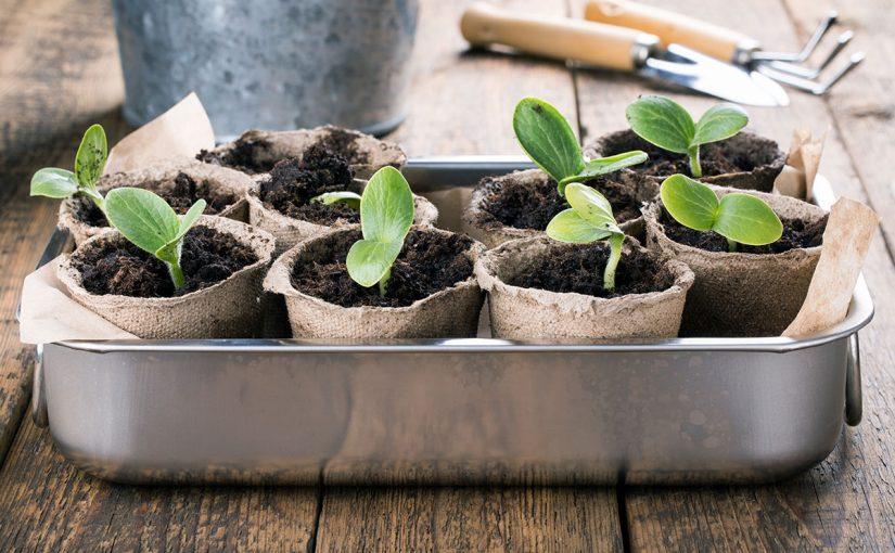 اكتب اربع خصائص شائعة تشترك فيها جميع النباتات البذرية