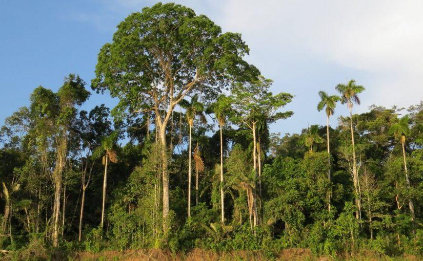 لماذا تعد النباتات الرائده مهمه في البيئات غير المستقره