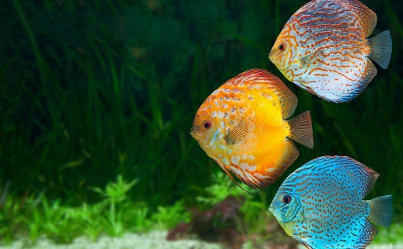 ما وظيفة جهاز الخط الجانبي في الاسماك