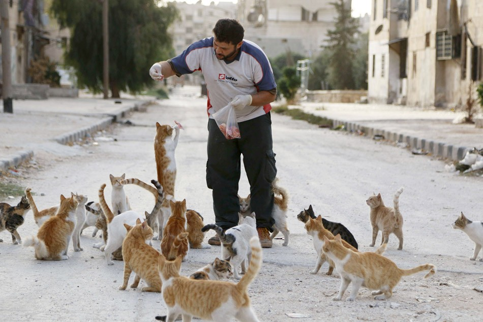 أفضل صور الرفق بالحيوانات