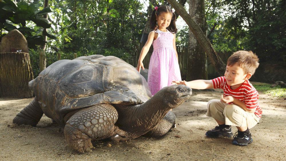 صور عن الرفق بالحيوانات للأطفال