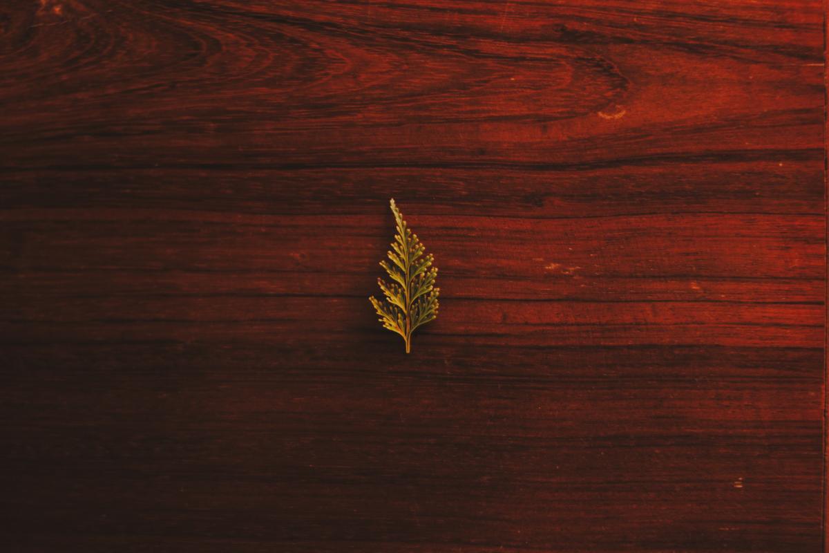 من أنواع الأخشاب الطبيعية المناسبة للحفر في السعودية