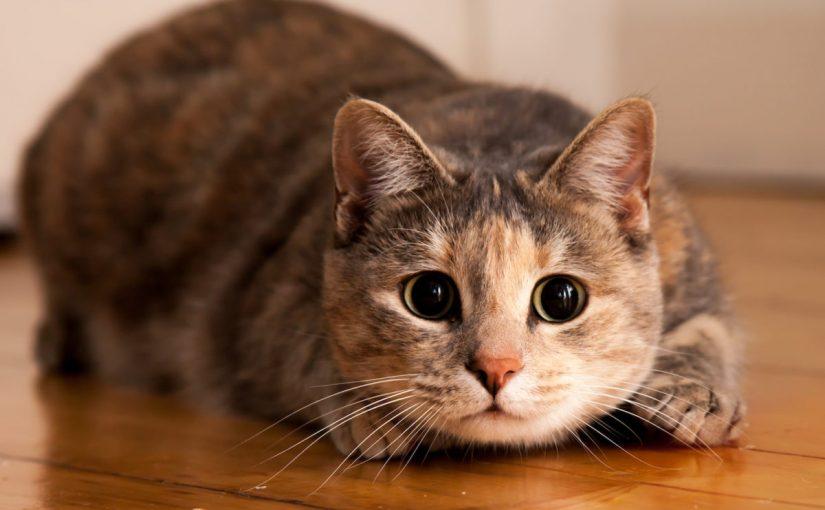 اسماء قطط اناث مضحكة