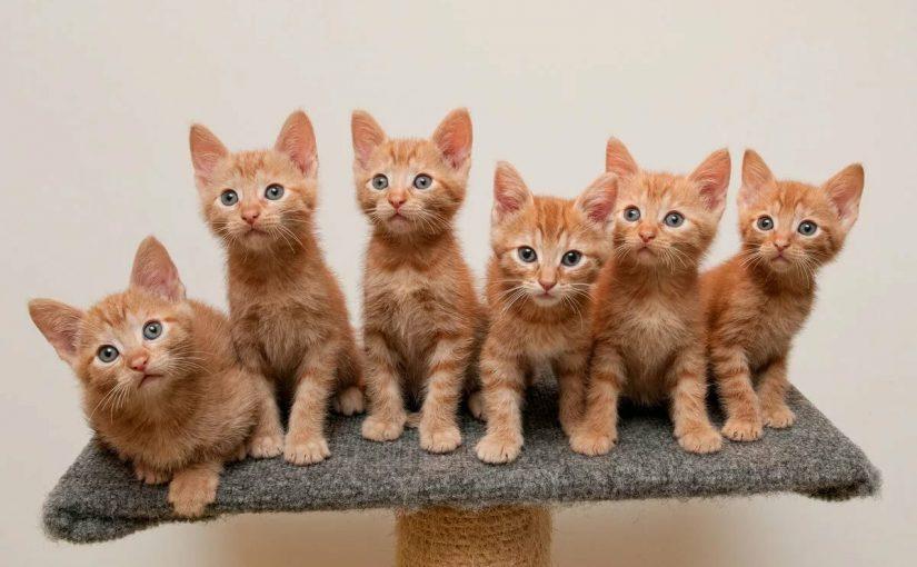 اسماء قطط اناث هندية