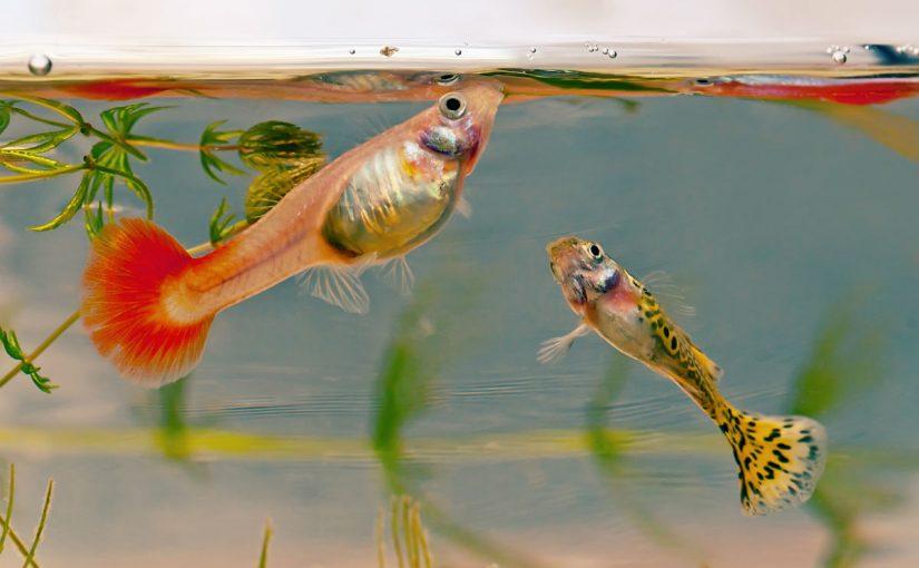 ما هو نوع الإخصاب في الأسماك