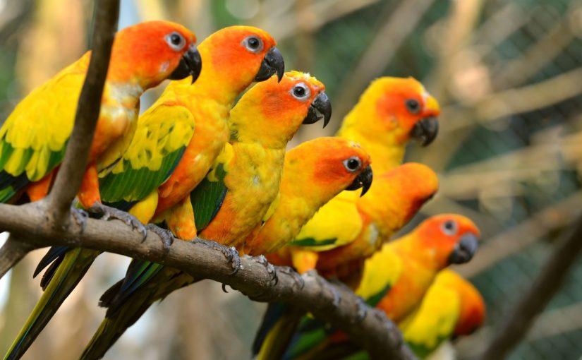 درجة الحرارة في الطيور