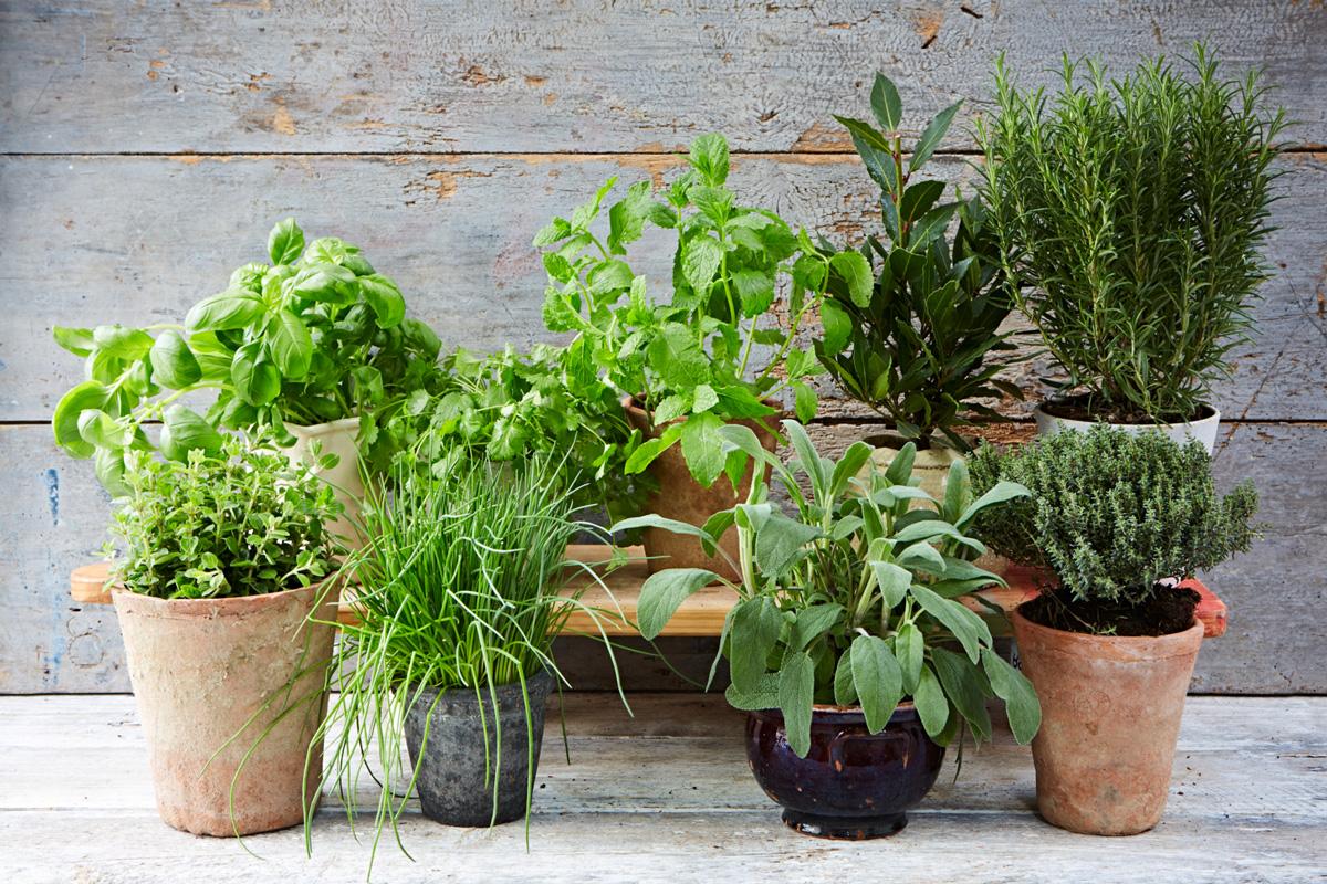 نبات بحرف الثاء