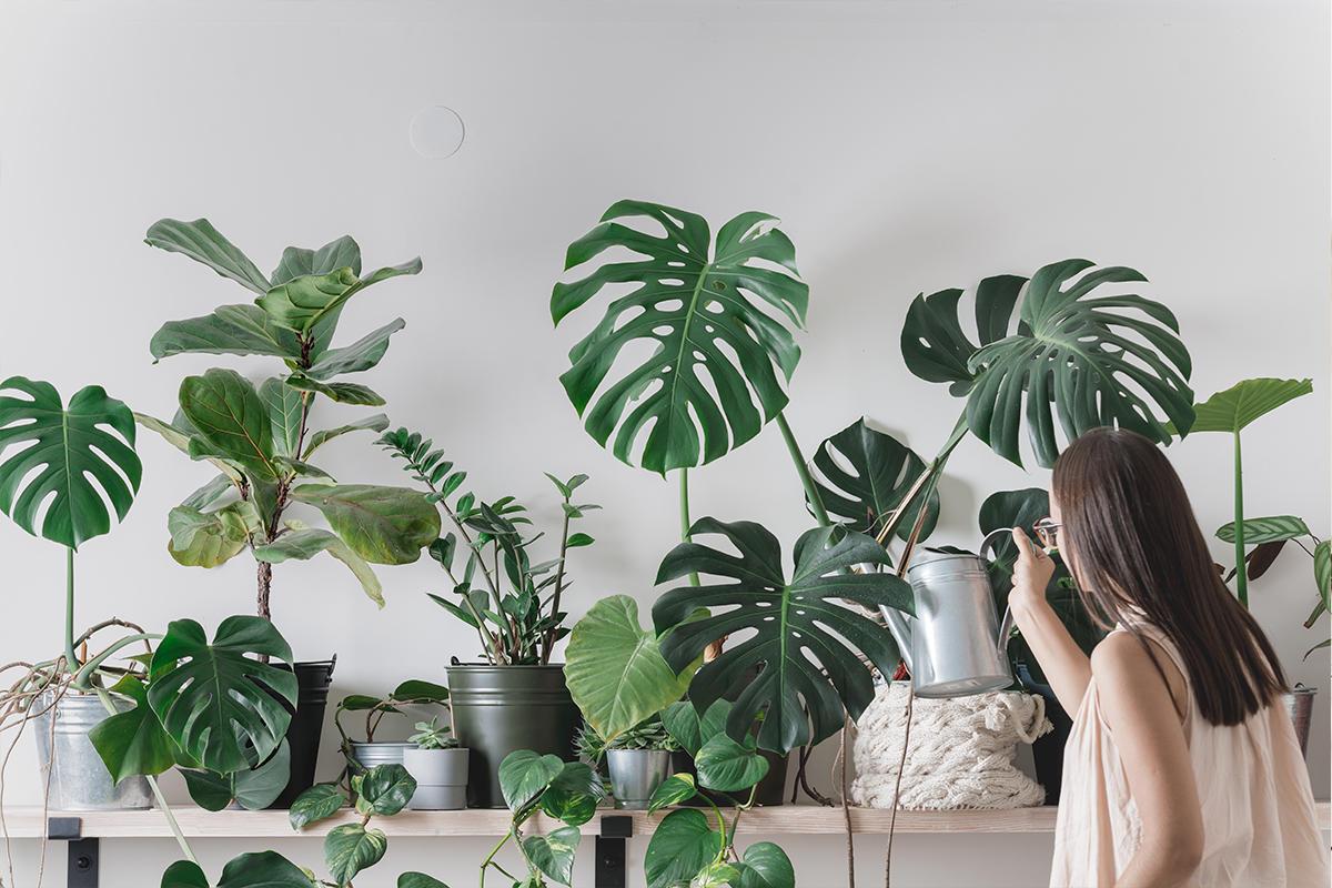 نباتات بحرف الميم متنوعة