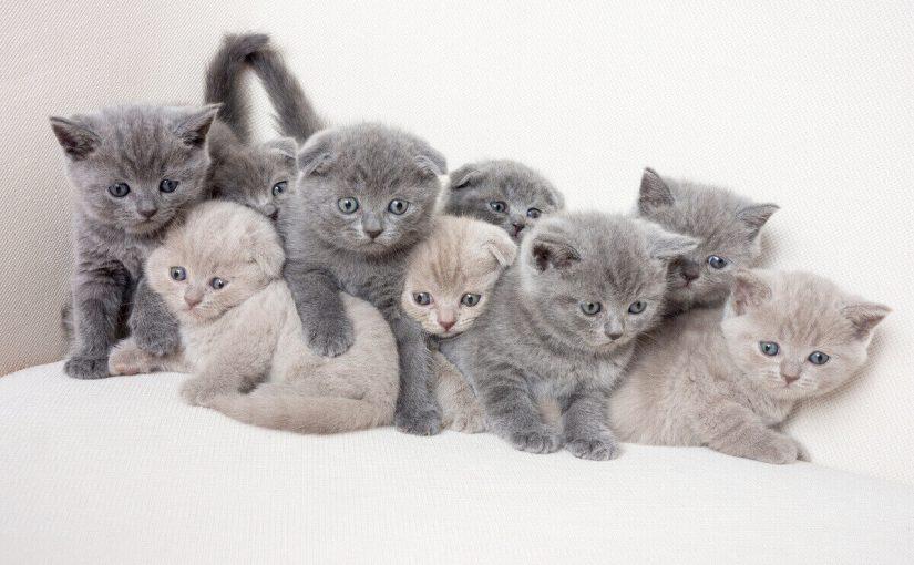 اسماء قطط ملكية اناث