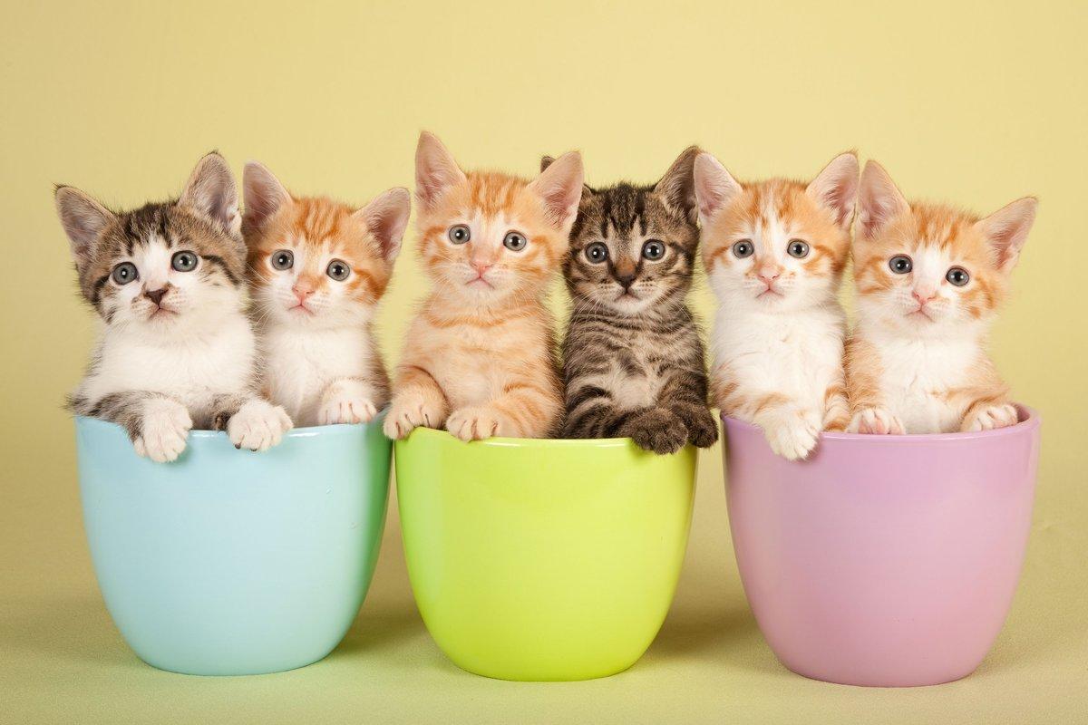 اسماء قطط اناث فرنسية ملكية
